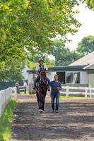 Early Belmont Stakes favorite Exaggerator, trained by Keith Desormeaux, walks to the training track at Belmont Park in Elmont New York.