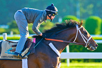 Commanding Curve breezed 4 furlongs over the Belmont Park main track in preparation for the 146th Belmont Stakes.