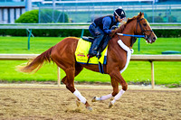 Tapiture gallops around the Churchill Downs oval in preparation for the 140th Kentucky Derby.