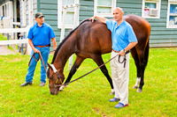 Belmont Stakes 146 contender Commanding Curve grazes as West Point Thoroughbred's principal owner Terry Finley soothes him.