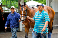 Normandy Invasion schools in the paddock in preparation for the Metropolitan Handicap on Belmont Stakes day at Belmont Park in New York.