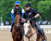 American Pharoah returns from a gallop accompanied by Baffert stable pony Smokey in preparation for the Belmont Stakes (GI) and the chance to become only the 12th horse to win the Triple Crown.