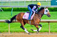 Aurelia's Belle gallops on the main track in preparation for the 140th Kentucky Oaks.