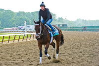 Filly Unlimited Budget gallops along the main track at Belmont P